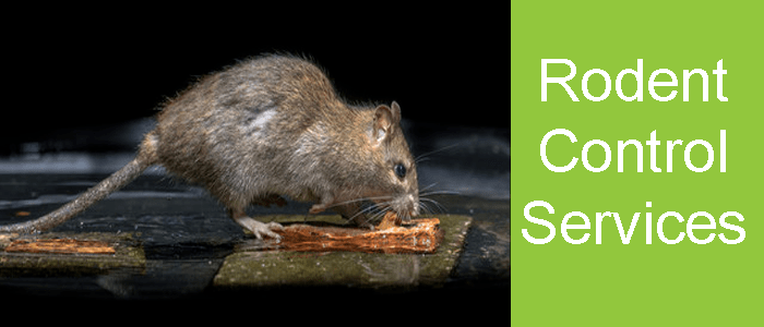 Rodent Control Fairfield