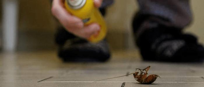 Cockroach Control Fairfield